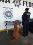 PF aseguró productos procedente de Morelos